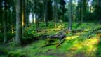 Häufiger Ort des Geschehens: Der Märchenwald (Bild: Jörg Trampert / Pixelio)