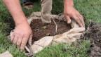 Nahaufnahme von einem Mann, der einen Baum pflanzt.