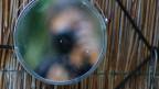 Ein Fotograf verschwommen in einem kreisrunden Spiegel.
