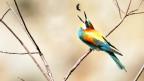 Symbolbild: Ein Vogel frisst ein Insekt.