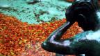 Symbolbild: Brunnen mit Herbstblätter.