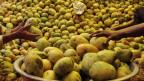 Indische Mangos: Liegen auch bei uns im Supermarkt.
