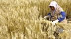 Warum der Mensche ein Recht auf Wissenschaft hat – am Beispiel der Saatgut-Forschung