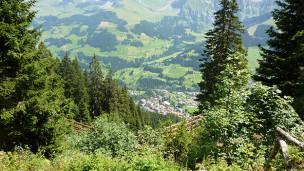 Audio «Der Schutzwald – durch den Klimawandel in Gefahr» abspielen.
