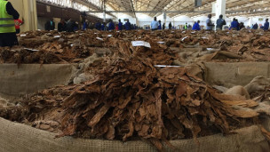 Audio «Tabak macht Malawi abhängig und krank» abspielen.