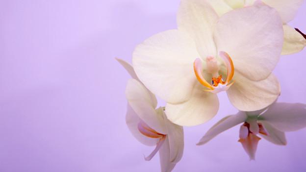 die mini orchideen kleine pflanze grosse freude. Black Bedroom Furniture Sets. Home Design Ideas