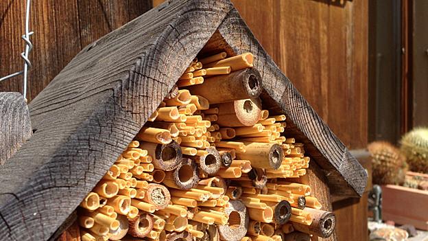 wildbienen anlocken ratgeber srf. Black Bedroom Furniture Sets. Home Design Ideas