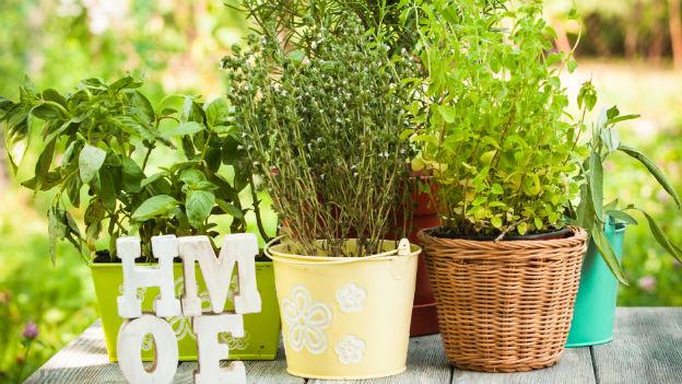heilpflanzen auf dem balkon gesund und h bsch anzuschauen ratgeber schweizer radio und. Black Bedroom Furniture Sets. Home Design Ideas